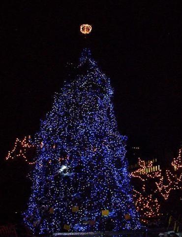 多伦多市政府门前的圣诞树