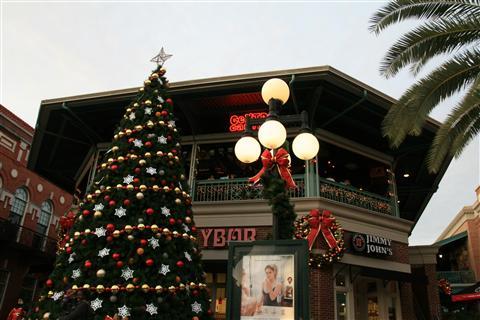 坦帕市街头的圣诞树